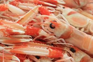 七个月宝宝能吃虾吗七个月宝宝有哪些生长发育指标